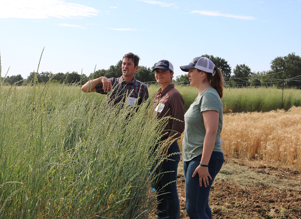 From left, Mark Lundy, Kalyn Diederich, and Taylor Becker looking at Kernza plant.