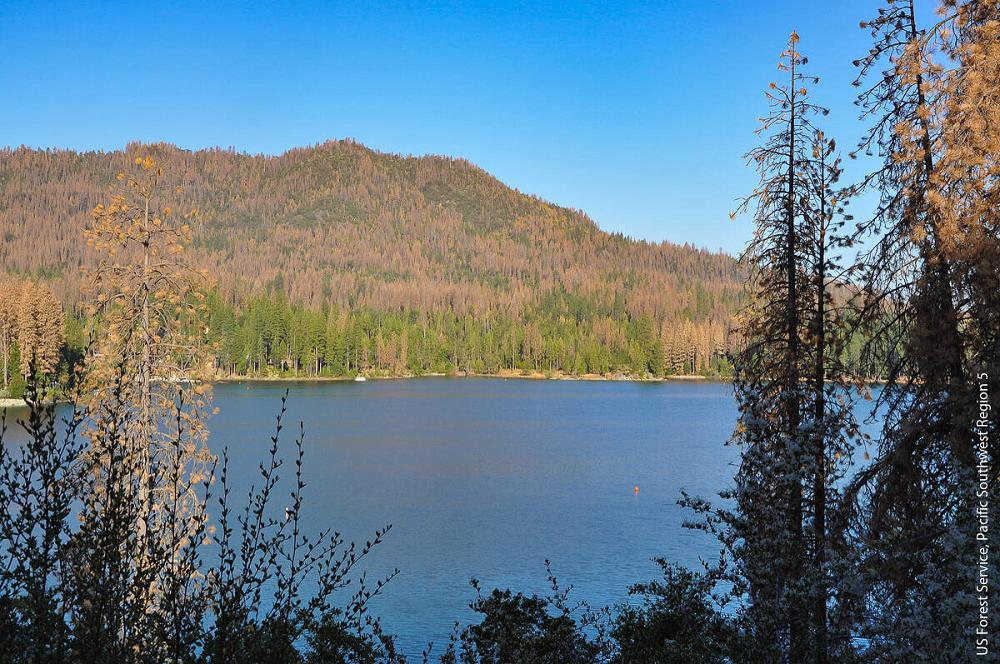 (photo US Forest Service, Pacific Southwest Region 5)