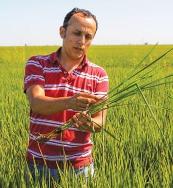 Luis Espino, UCCE farm advisor, says precise application of fertilizer can help rice avoid diseases. (photo Bob Johnson)