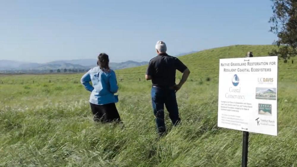 A grassland in which strip seeding will occur.