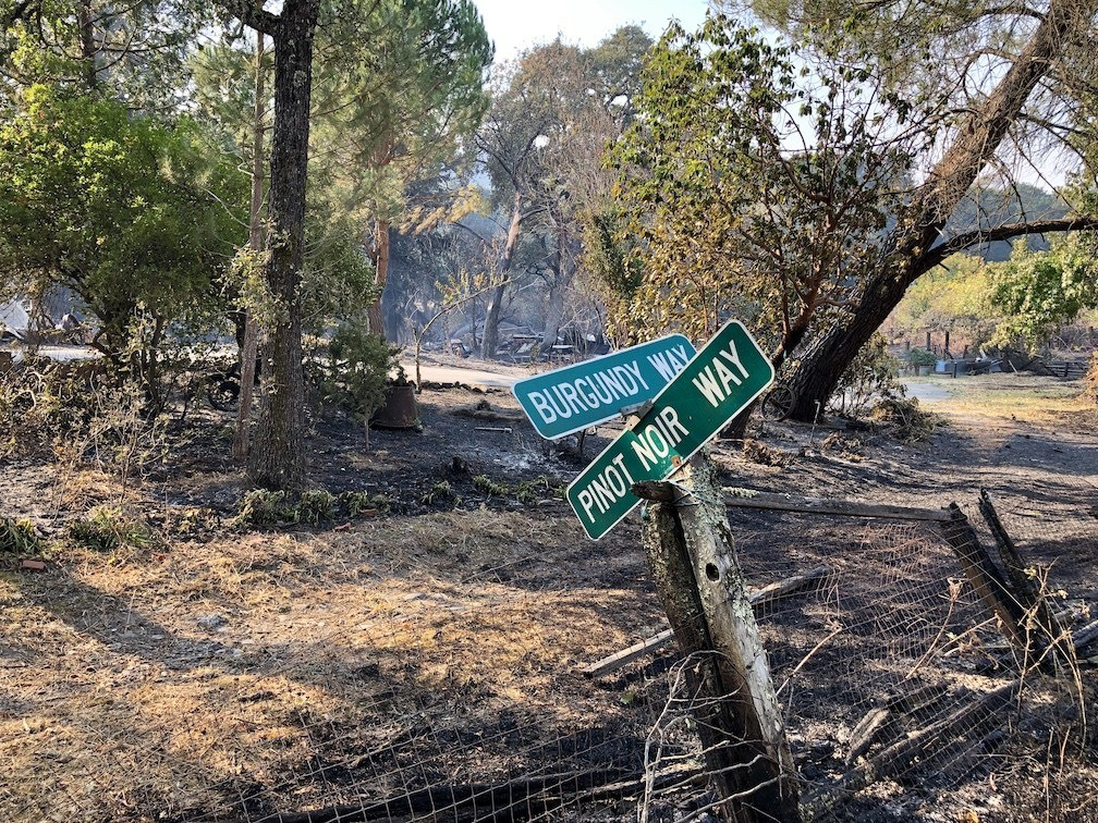 Road signs sit on the edge of a Sonoma County vineyard scorched by the October 2019 Kincade fire. The vegetation here is primarily oak woodland and chaparral. (Getty)