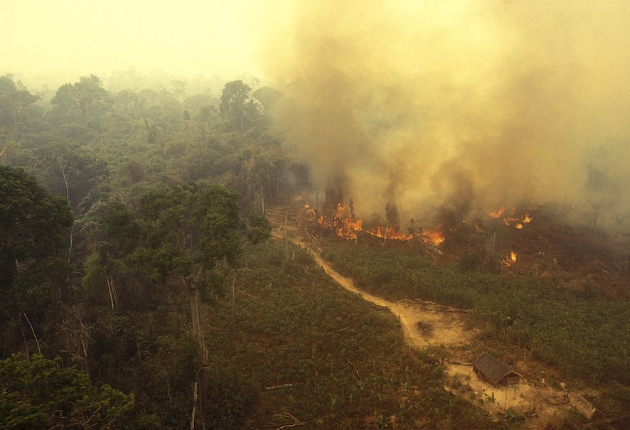 Wildfire burns in the Amazon rainforest of Brazil. (Getty)
