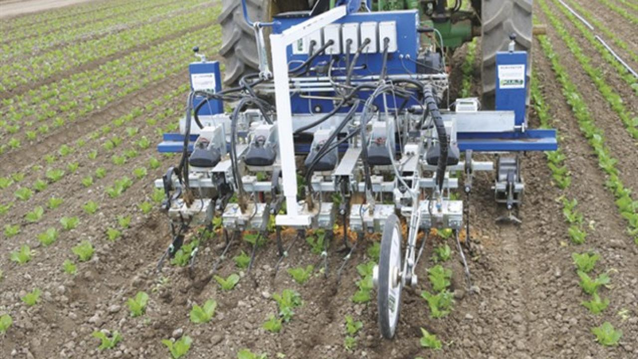 Steve Fennimore, Cooperative Extension specialist with the University of California, Davis, says automatic weeders like the Robovator shown here will help ease the shortage of skilled employees needed for hand weeding. (photo Steve Fennimore/UC Davis)