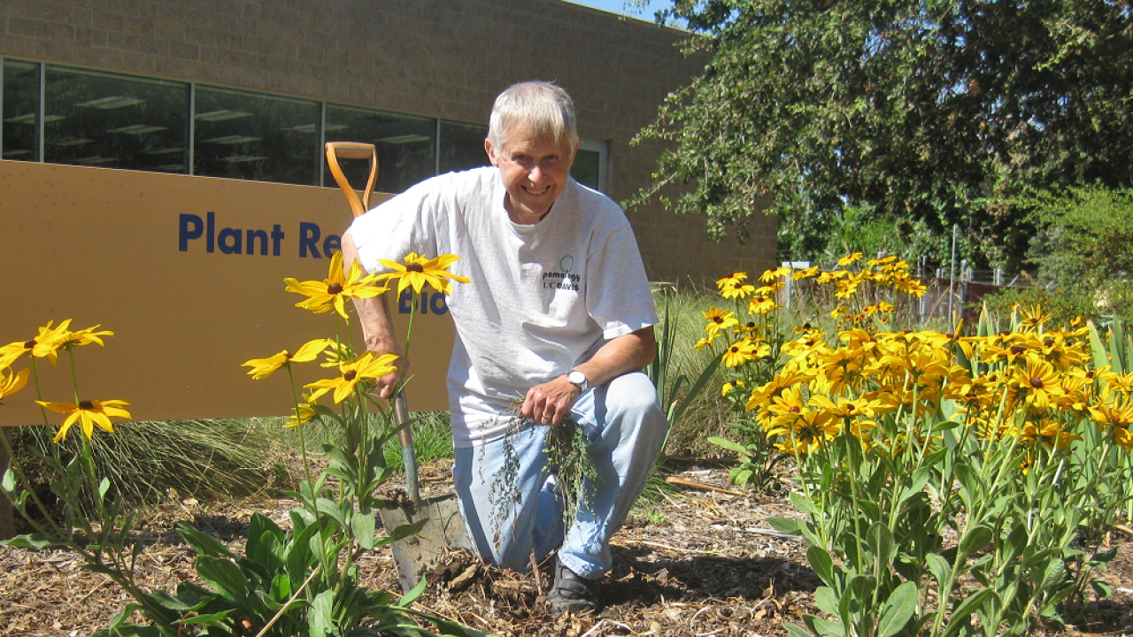 John Labavitch planting a garden in front of Plant Reproductive Biology at UC Davis.