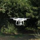 A drone flying in an orchard