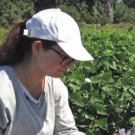 Student in field learning to breed
