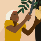 Image of woman harvesting from tree