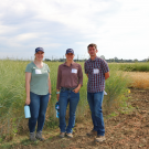 From left, UC Davis graduate students Taylor Becker and Kalyn Diederich, with Plant Sciences faculty member and Cooperative Extension specialist Mark Lundy, standing in front of Kernza (tall green plant), with wheat (shorter tan plant) in the back right.