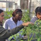 Undergraduate students in a Plant Sciences class at UC Davis