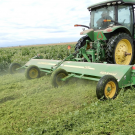 Cover crop shredding at Teixeira & Sons in Firebaugh on April 4, 2020. (photo UCANR)