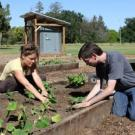 Students planting crops at the Horticulture Innovation Lab