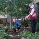 Stacey Parker and Ellen Zagory plant a low-water use garden.