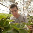 Student with strawberry plant